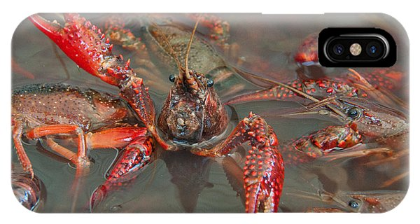 Crawfish Boil Galveston Style IPhone Case