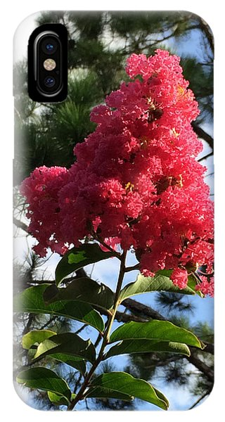 Crepe Myrtle And Mr. Pine IPhone Case