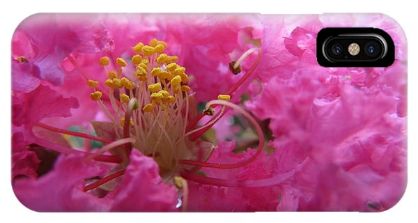Crepe Myrtle In The Middle IPhone Case