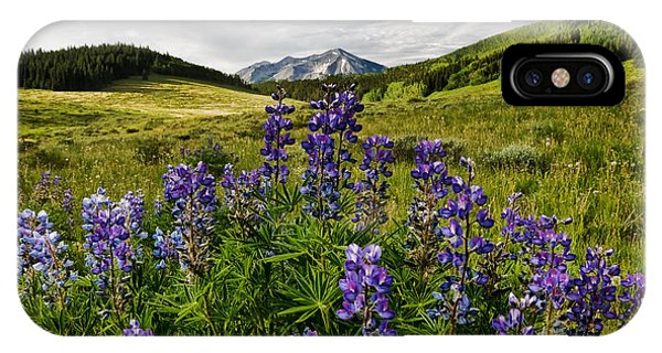 Crested Butte Lupines IPhone Case