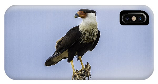 Crested Caracara IPhone Case