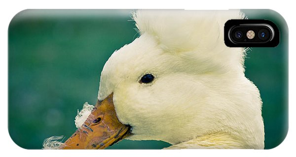 Crested Duck IPhone Case