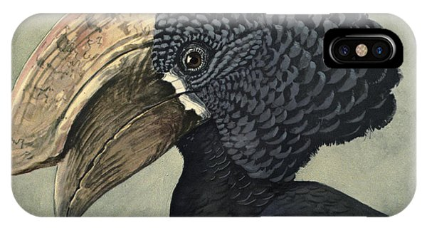 Crested Hornbill IPhone Case
