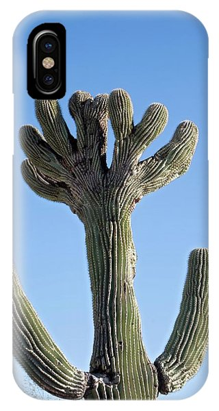 Adapted iPhone Case - Crested Saguaro Cactus by Jim West