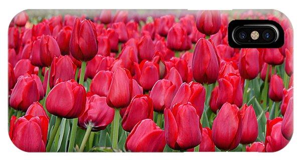 Crimson Tulips  IPhone Case