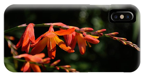 Crocosmia 'dusky Maiden' Flowers IPhone Case