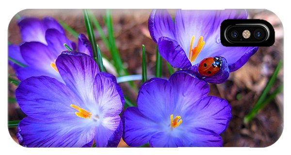 Crocus Flowers And Ladybug IPhone Case