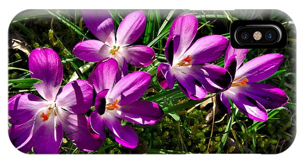 IPhone Case featuring the photograph Crocus In The Grass by Jeremy Hayden