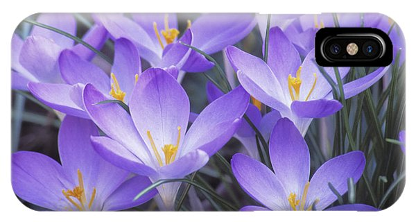 Crocus Joy IPhone Case