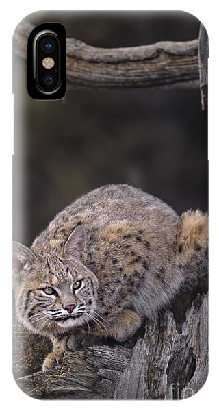 IPhone Case featuring the photograph Crouching Bobcat Montana Wildlife by Dave Welling