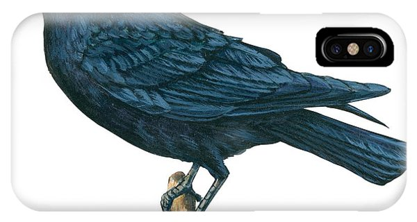 Raven iPhone Case - Crow by Anonymous