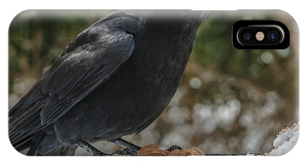 Crow On Feeder IPhone Case