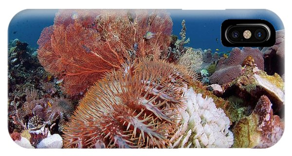South Pacific Ocean iPhone Case - Crown Of Thorns Starfish Eating Corals by Scubazoo/science Photo Library