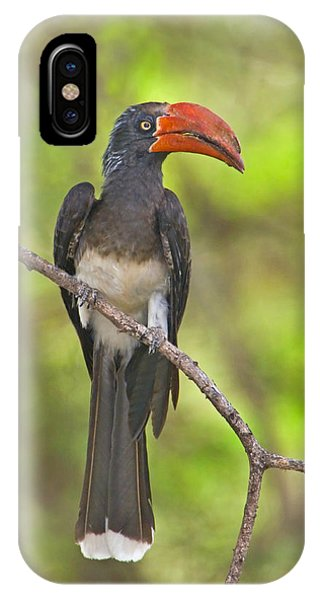 Crowned Hornbill Perching On A Branch IPhone Case