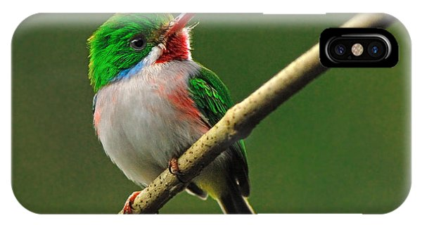 Cuban Tody IPhone Case