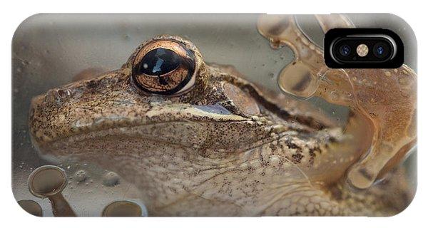 Cuban Treefrog IPhone Case