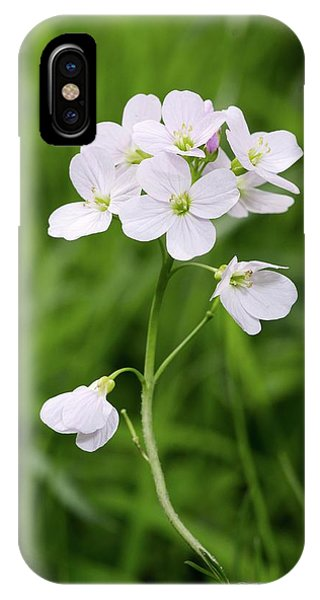 Cuckoo iPhone Case - Cuckoo Flower (cardamine Pratensis) by Annie Haycock