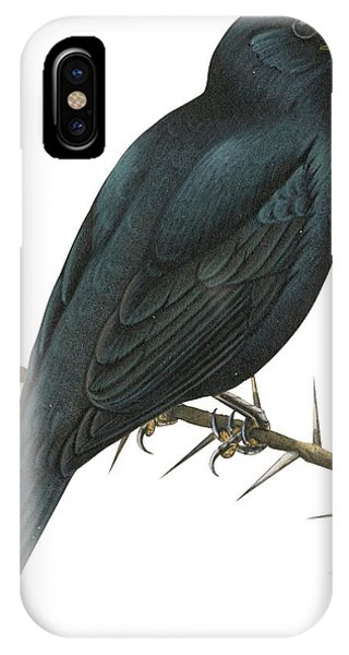 Cuckoo iPhone Case - Cuckoo Shrike by Anonymous