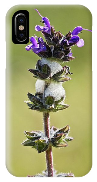 Cuckoo iPhone Case - Cuckoo-spit On Clary (salvia Verbenaca) by Bob Gibbons