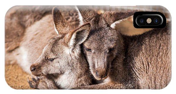 Cuddling Kangaroos IPhone Case