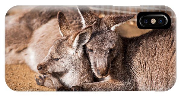 Cuddling Kangaroos IPhone Case