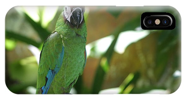 Curacao Parrot IPhone Case