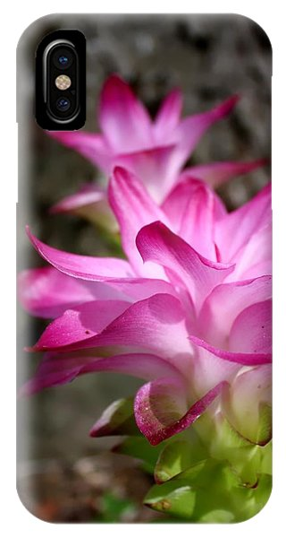 Curcuma IPhone Case