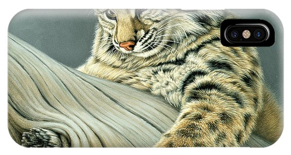 Bobcats iPhone Case - Curiosity - Young Bobcat by Paul Krapf