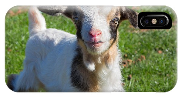 Curious Baby Goat IPhone Case