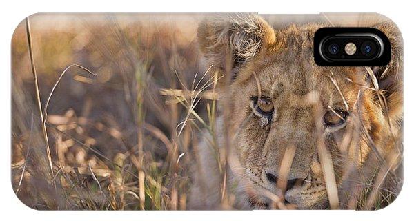 Curious Cub IPhone Case