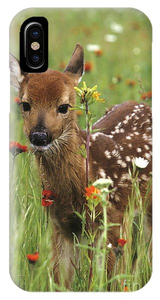 White Tailed Deer iPhone Case - Curious Fawn by Chris Scroggins