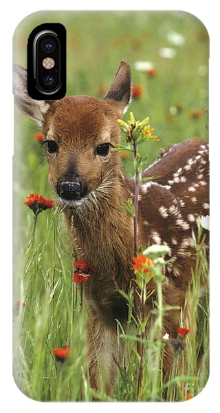 Curious Fawn IPhone Case