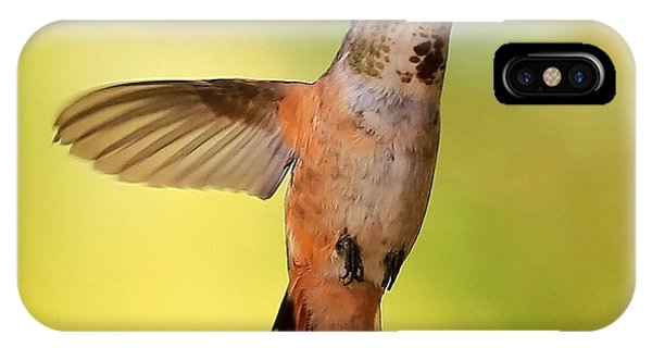 Stop Action iPhone Case - Curious Hummingbird by Carol Groenen