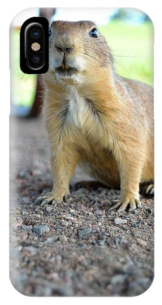 Curious Prairie Dog Phone Case by Ray Franks