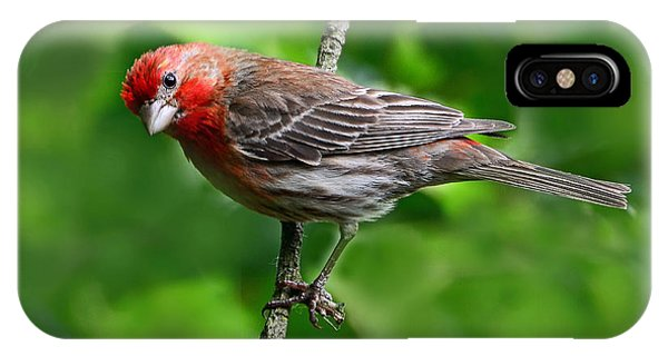 Curious Purple Finch IPhone Case