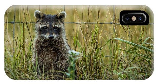 Curious Raccoon IPhone Case