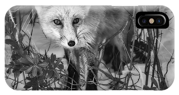 Curious Red Fox Bw IPhone Case