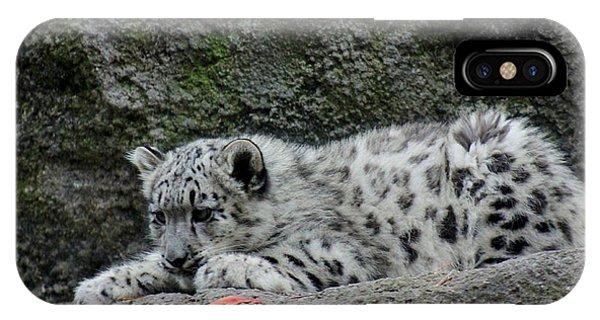 Curious Snow Leopard Cub IPhone Case