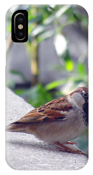 Curious IPhone Case