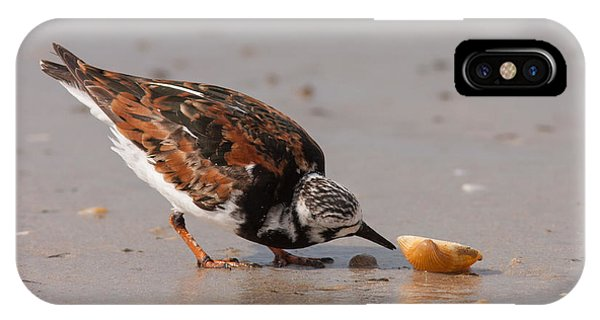 Curious Turnstone IPhone Case
