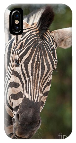 Curious Zebra IPhone Case