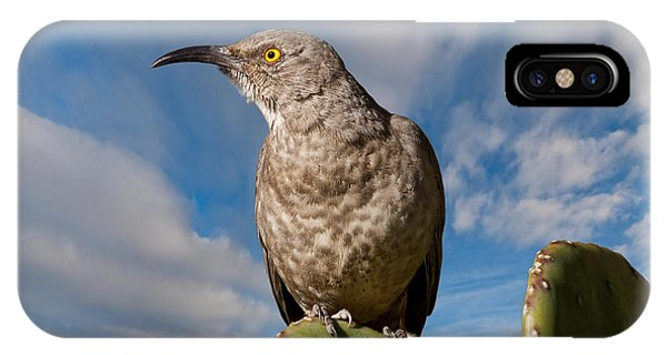 Curve-billed Thrasher On A Prickly Pear Cactus IPhone Case