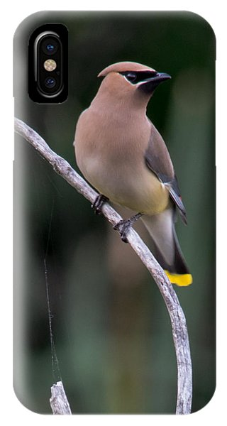 Curves - Cedar Waxwing    Phone Case by Doug Underwood