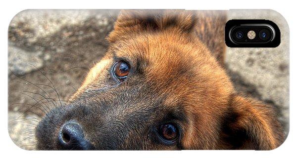 Cute Dog Closeup IPhone Case