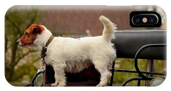 Cute Dog On Carriage Seat Bruges Belgium IPhone Case