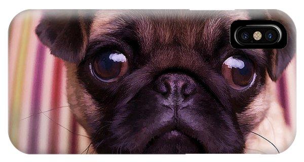 Cute Pug Puppy IPhone Case