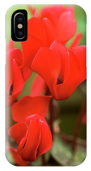 Scarlet iPhone Case - Cyclamen Persicum 'mini Scarlet' by Adrian Thomas