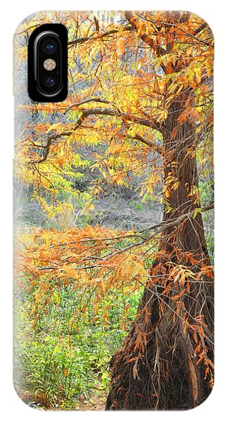 Cypress In Autumn IPhone Case
