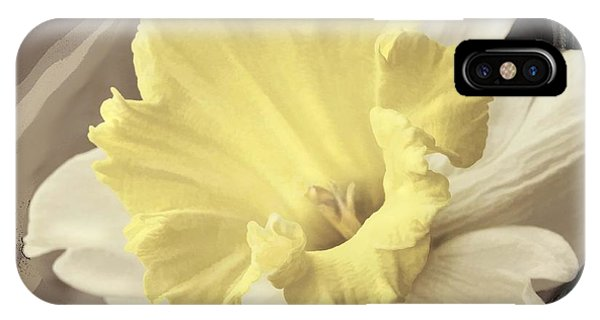 Daffadil In Yellow And White IPhone Case