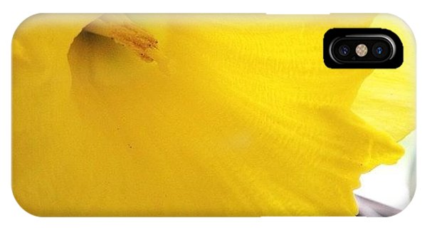 Nature iPhone Case - Daffodil by Blenda Studio